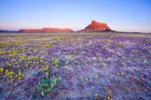 desert-badlands-montagne-soleil-fleur-695x463